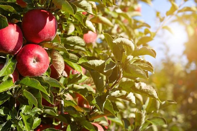 Slider – Apples