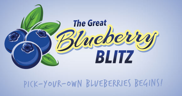 Blueberry Blitz at Maple Lawn Farms
