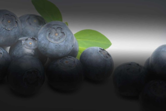 Slider – Blueberries