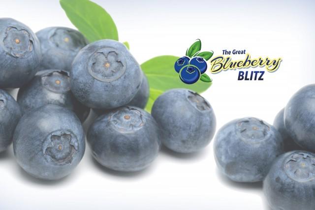 Slider – Blueberry Blitz