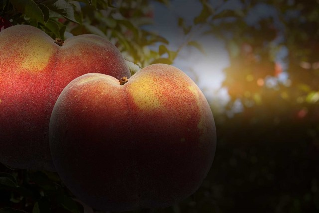 Slider – Peaches