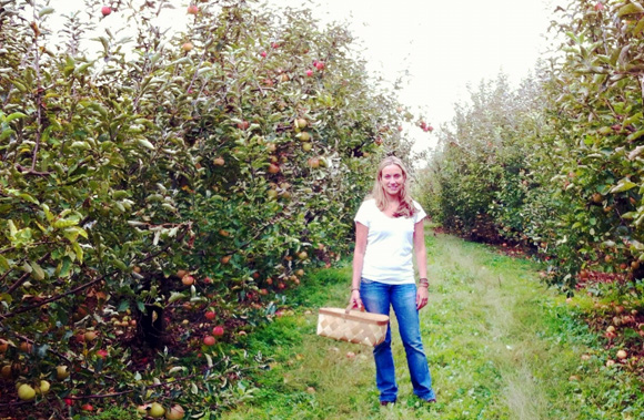 Fruit Orchards - York County, PA (U-Pick apples, berries, peaches, cherries, more)