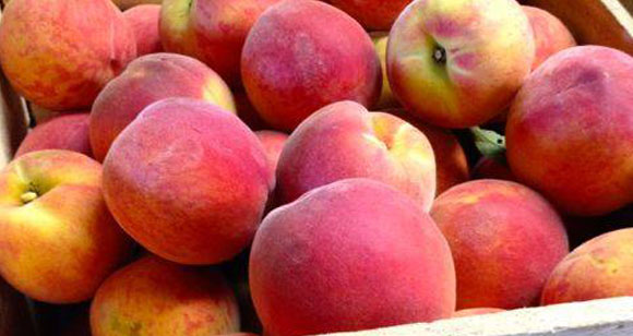U-Pick Peaches - York County, PA
